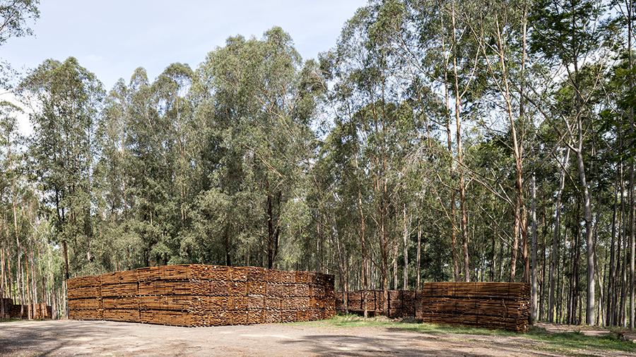 Floresta com grandes árvores de eucalipto. À direita, toras de madeira extraídas de forma sustentável, utilizadas na produção de pisos Indusparquet